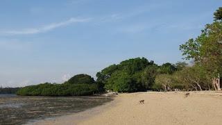 http://www.teluklove.com/2017/03/pesona-keindahan-wisata-pantai-bama-di.html