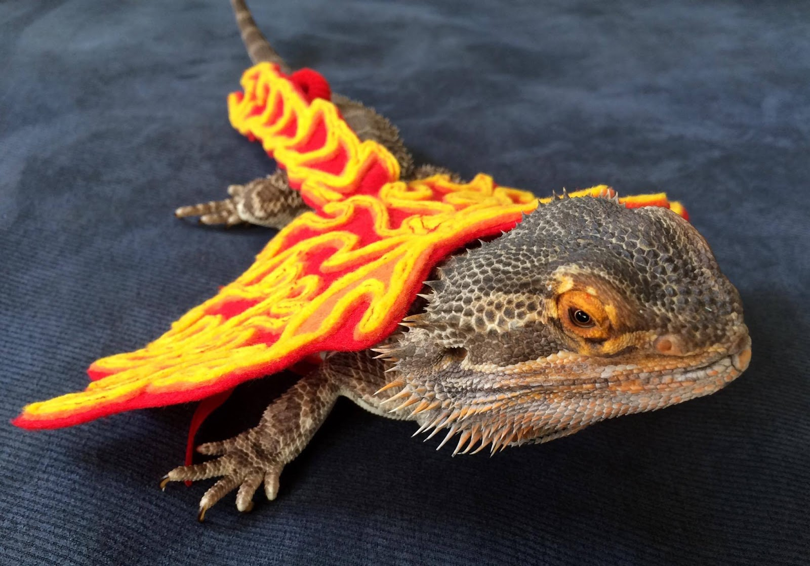 Two New Deluxe Etsy Costumes. Fire Dragon Wings & Sarahu0027s Bearded Dragon Rescue: Two New Deluxe Etsy Costumes
