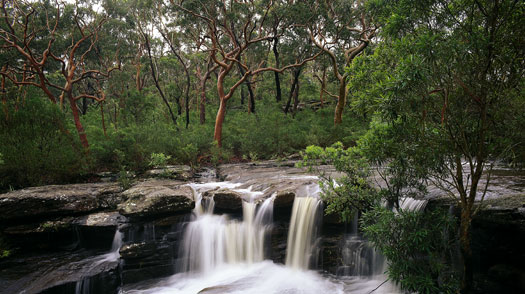 sydney royal national park history list-#31