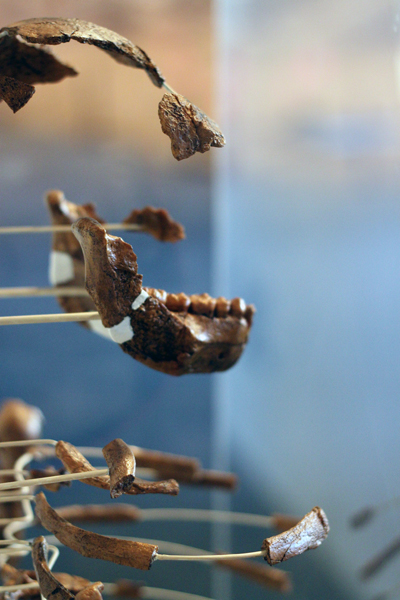 Exhibition aims to comprehensively explain human origins