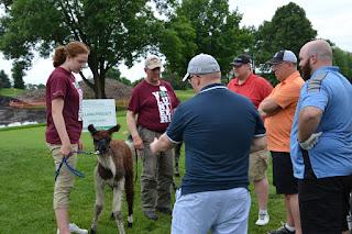 4-H'er showing golfers a llama
