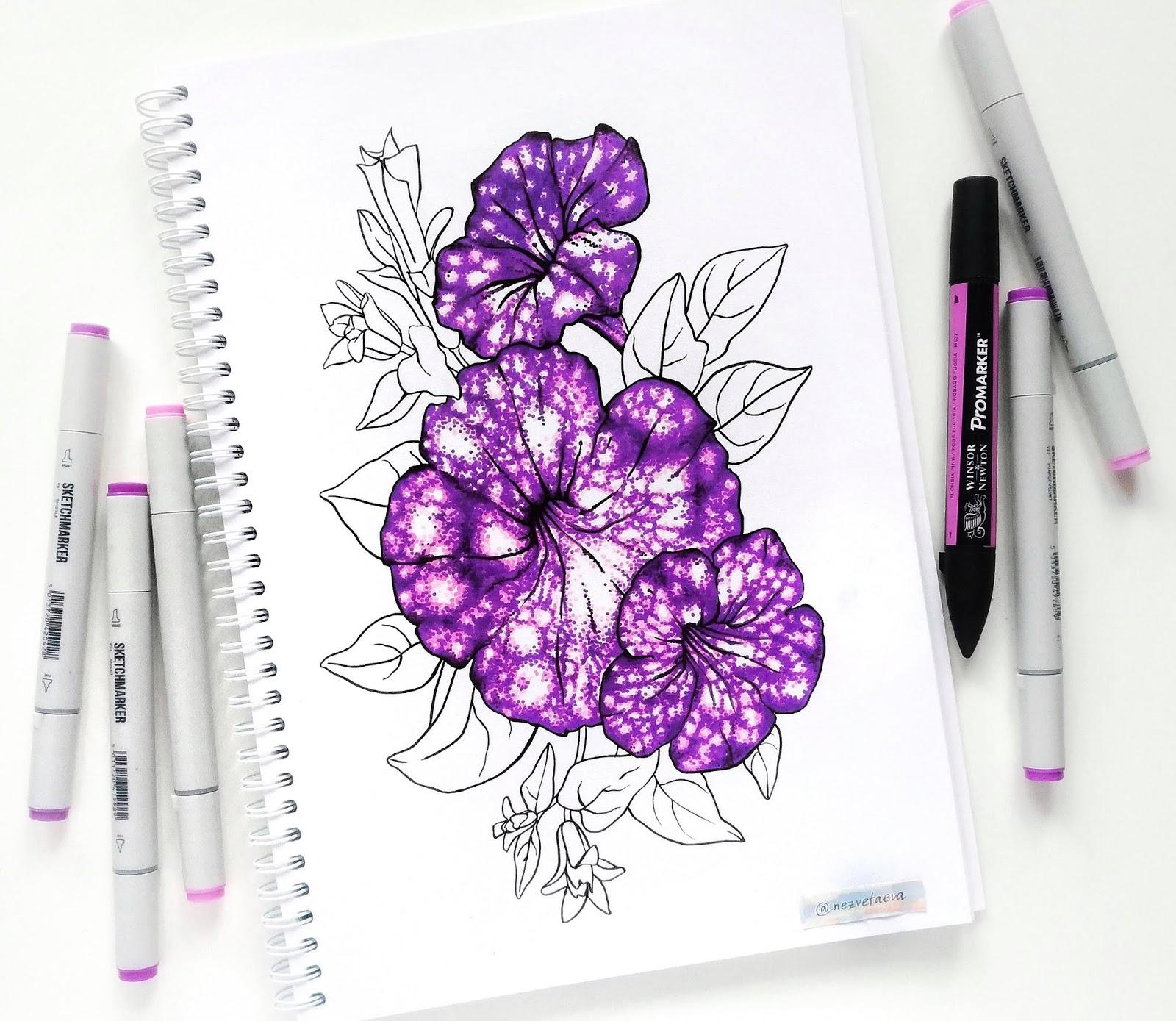 Sonia nezvetaeva, marker sketch, flower illustration, Petunia, Violet, Copic, Sketchmarkers, Promarker
