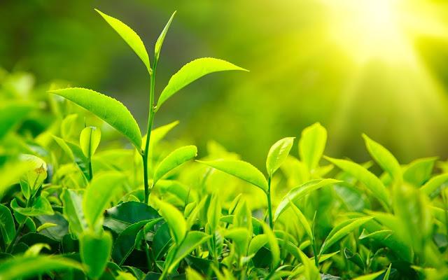 أعشاب ونباتات لعلاج نزيف الرحم