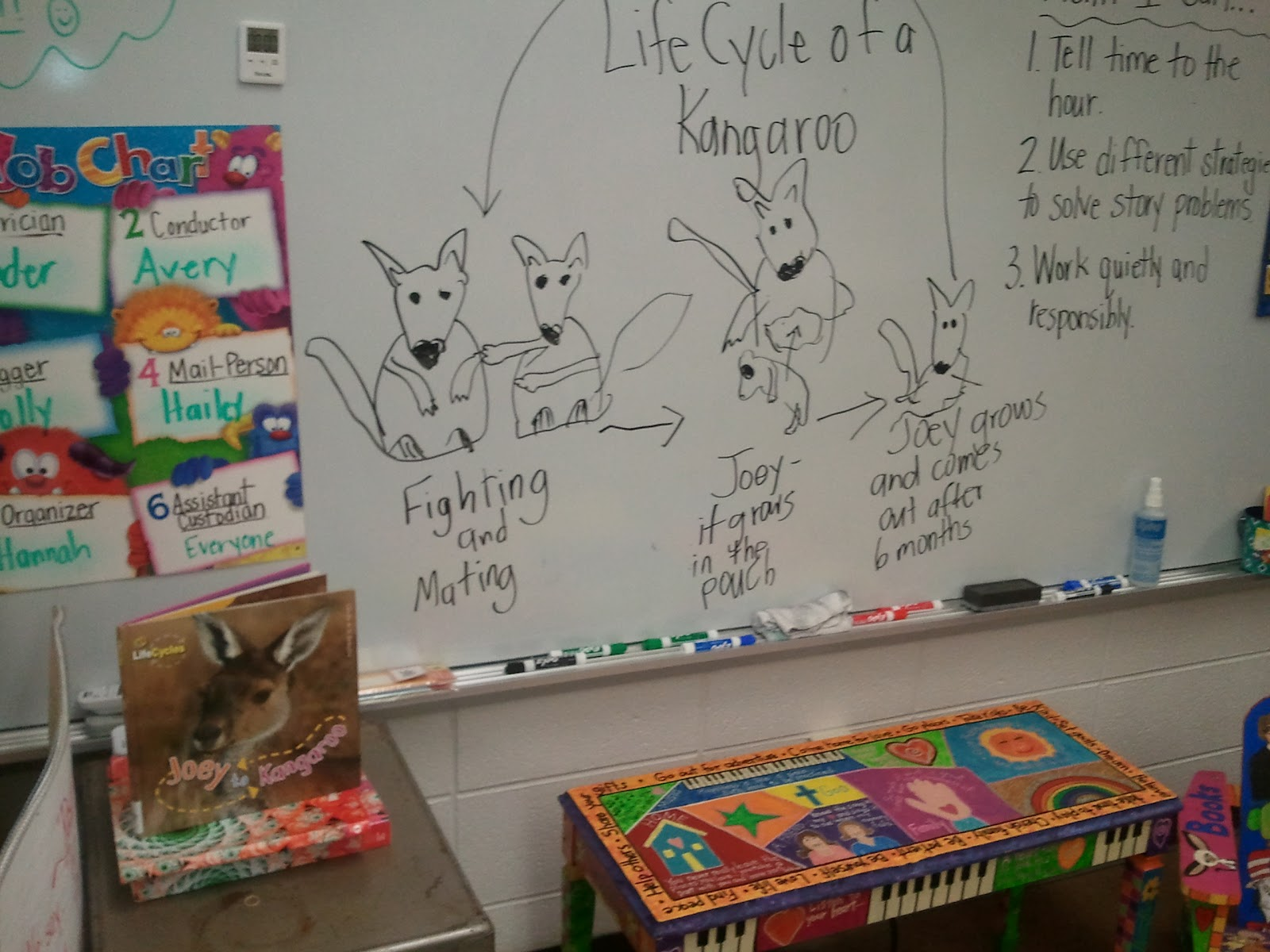 Mrs Clough S 2nd Grade Happenings Joey To Kangaroo
