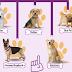 Ποιοι σκύλοι είναι πιο επιρρεπείς σε δερματικές παθήσεις...