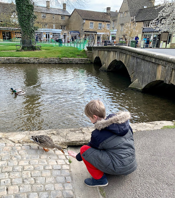 feeding the ducks at Bourton-on-the-water, Cotswolds