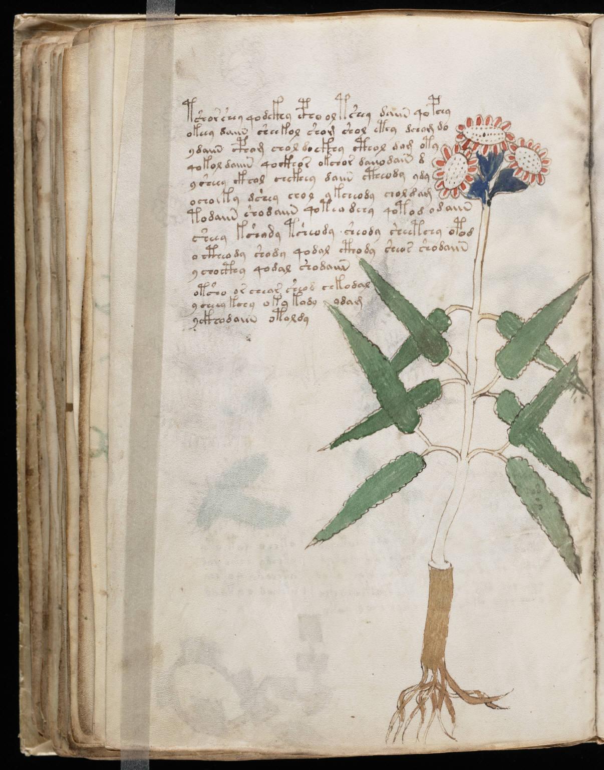 manuscrito104