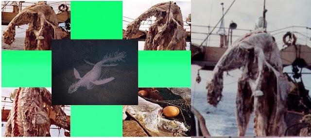 Zuiyo-maru Carcass Deniz Canavarı