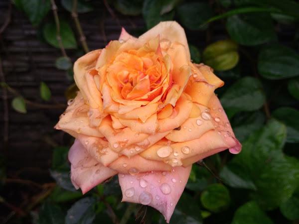 Korelasi Antara Cinta dan Benci