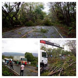 Vento forte derrubam árvores