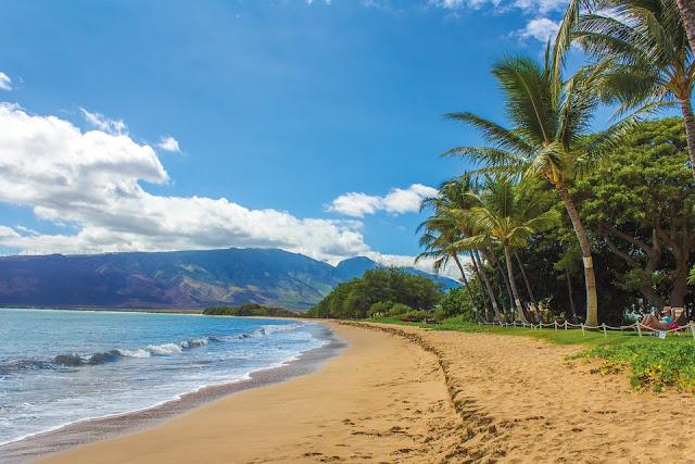 house sitting hawaii