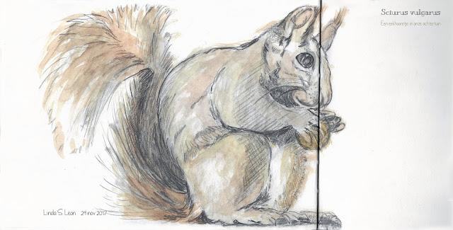 Eekhoorntje in de achtertuin