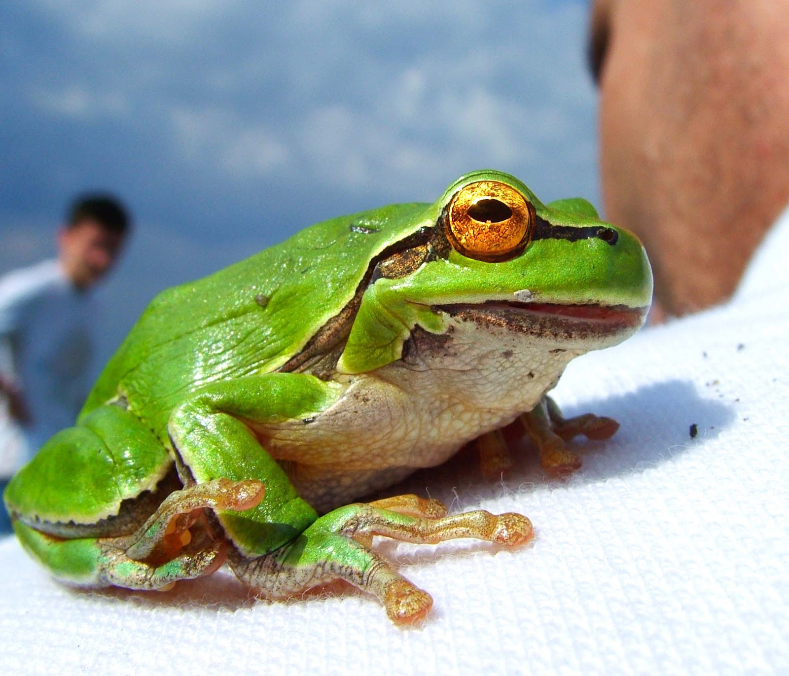Funny Frogs Hd Wallpapers Wallpapers Pictures Images