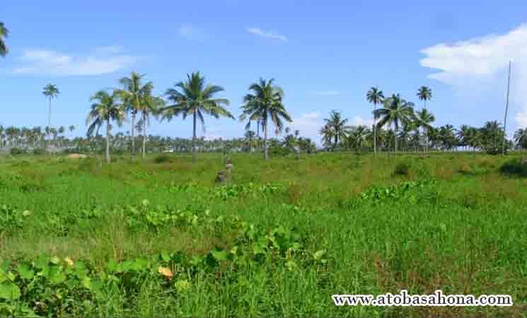 Pengertian Lingkungan hidup serta Upaya Pelestariannya