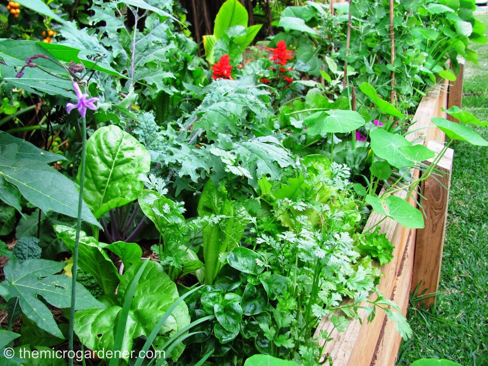 eudlo seed savers group july seedy sunday winter garden activities. Black Bedroom Furniture Sets. Home Design Ideas
