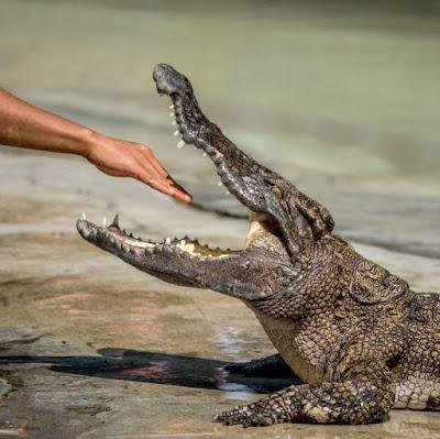 аллигатор и рука