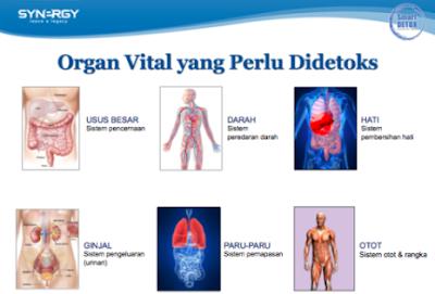 Organ Tubuh yang Perlu Di Detoksifikasi