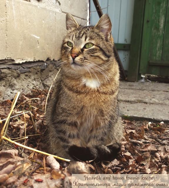Полосатый кот сидит на сухой листве весной