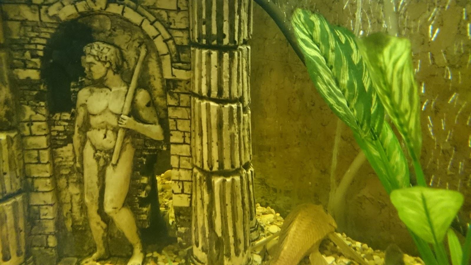 Картинки з природою для аквариума