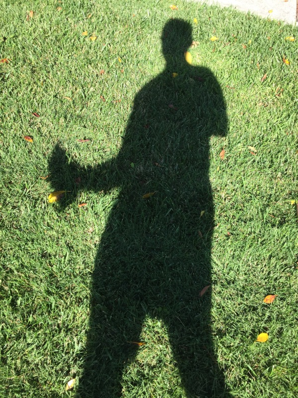Shadow on green grass