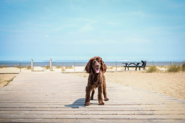 Dog Friendly Guide to Norfolk
