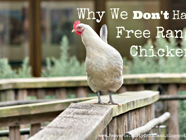 Why We Don't Have Free Range Chickens