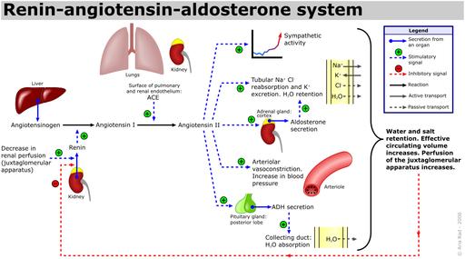 sistema renina-angiotensiona-aldosterona