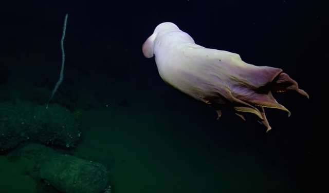Scientists capture photos of deep-sea 'ghost'