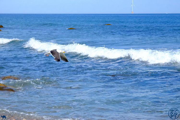 Le Chameau Bleu - Blog Voyage Block Island - Mouette de Block Isand- Rhode Island -USA