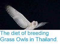 https://sciencythoughts.blogspot.com/2015/02/the-diet-of-breeding-grass-owls-in.html