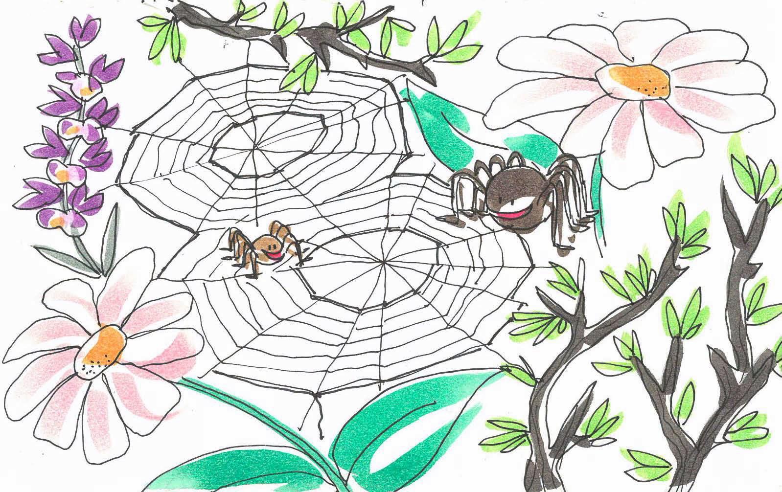 Cuento de una araña que aprendió a tejer