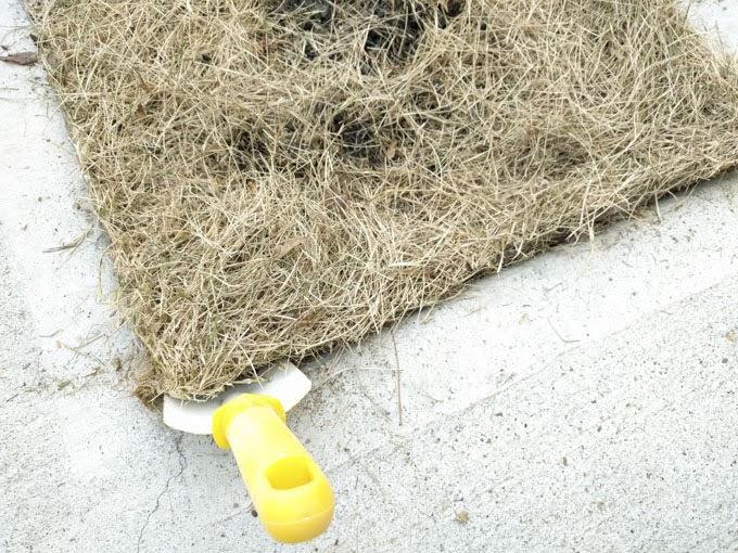 駐車場の目地の芝生を剥がします