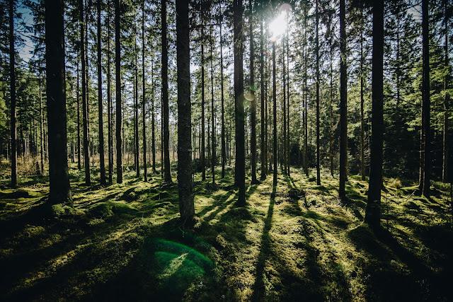 Eko lęk, czyli czy eko życie ma jakiś sens?