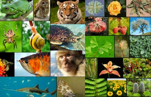 Tujuan Klasifikasi Makhluk Hidup