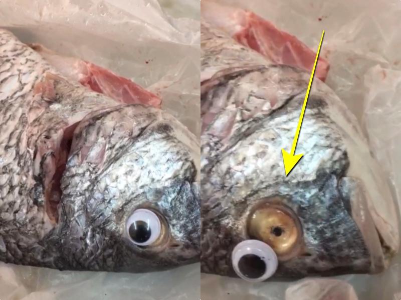 Vendían pescados con ojos falsos para que se vieran frescos