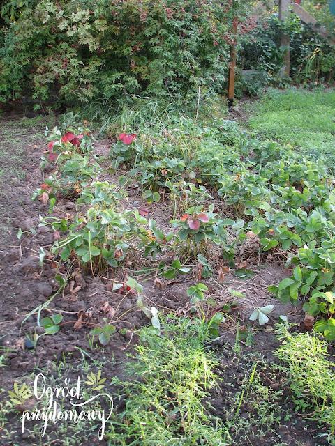 praca w warzywniku, ogród przydomowy