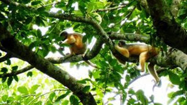 চলুন ঘুরে আসি:সিলেটের রেমা-কালেঙ্গা জাতীয় উদ্যান