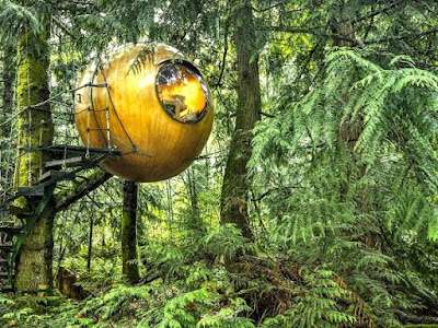 The House sphere suspended in the middle of a forest of Canada