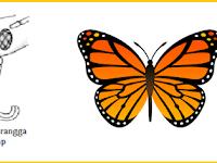 Bentuk Bentuk Mulut Serangga - Adaptasi Makhluk Hidup