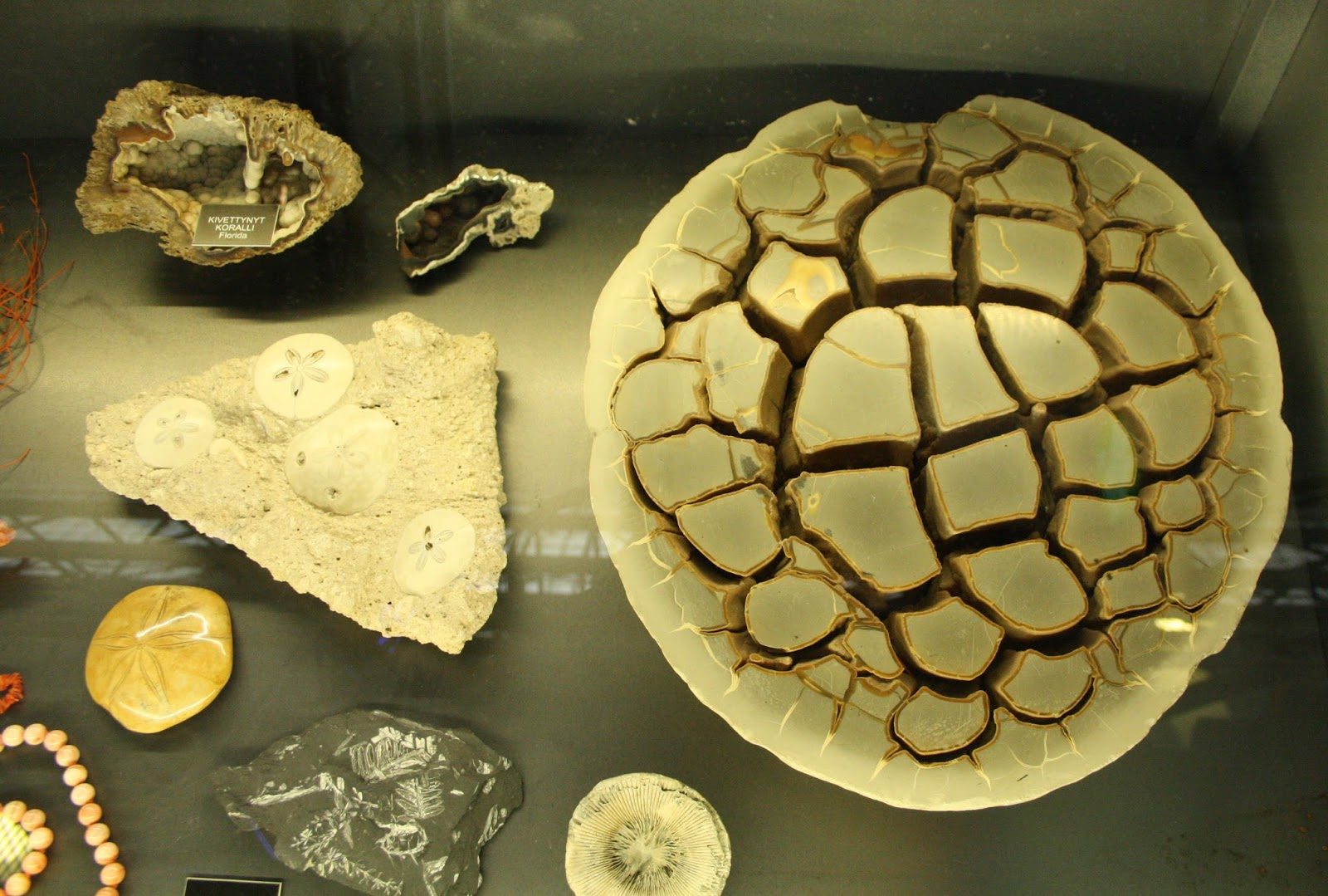 Museokeskus vapriikki, tampere, tampella, kivimuseo