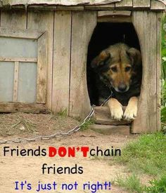 No one should have a dog, unless they are prepare to live with , care, and love a dog!