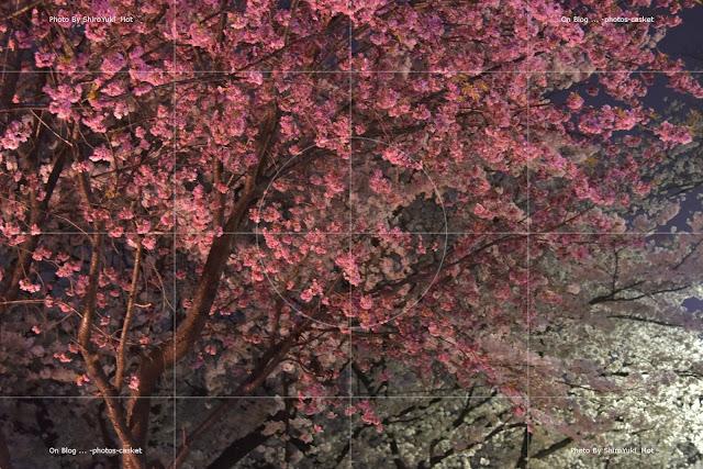 花 桜 Night Lights Gerry Mulligan