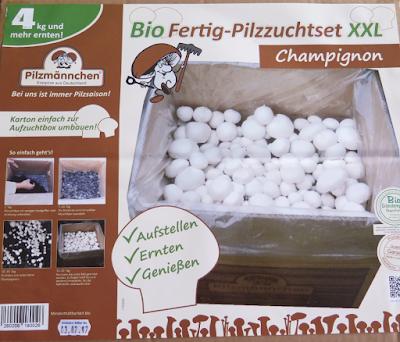 pilzm nnchen bio champignons selber z chten tante reenes testfamilie. Black Bedroom Furniture Sets. Home Design Ideas