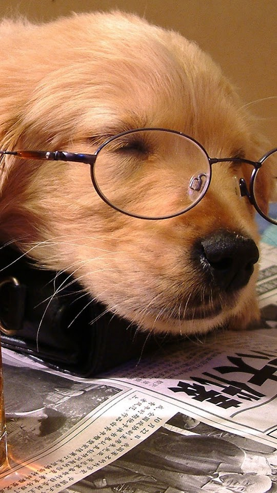 Golden Retriever With Glasses   Galaxy Note HD Wallpaper