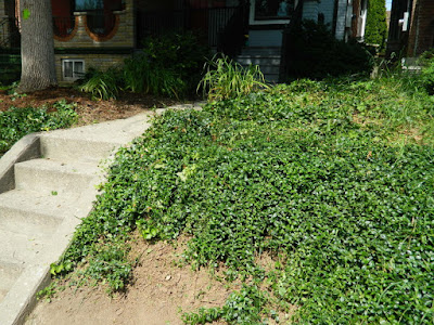 Palmerston Toronto Front Garden Clean up after by Paul Jung Gardening Services Toronto