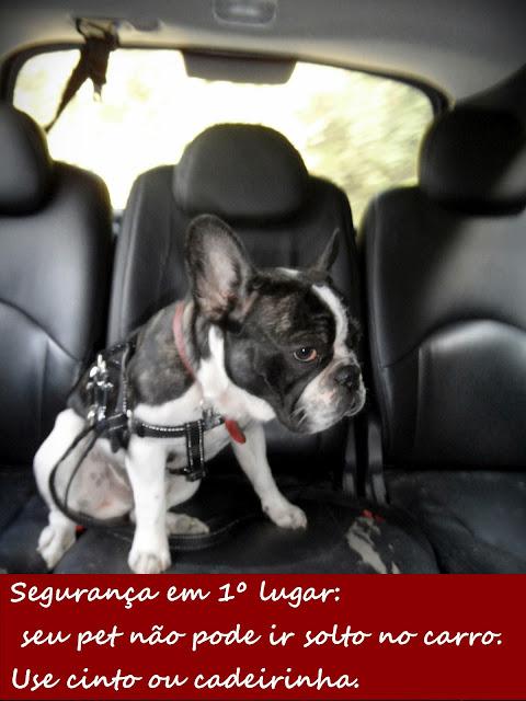 viagem com cachorro pet friendly roteiro completo para viajar com cão visconde de mauá rj