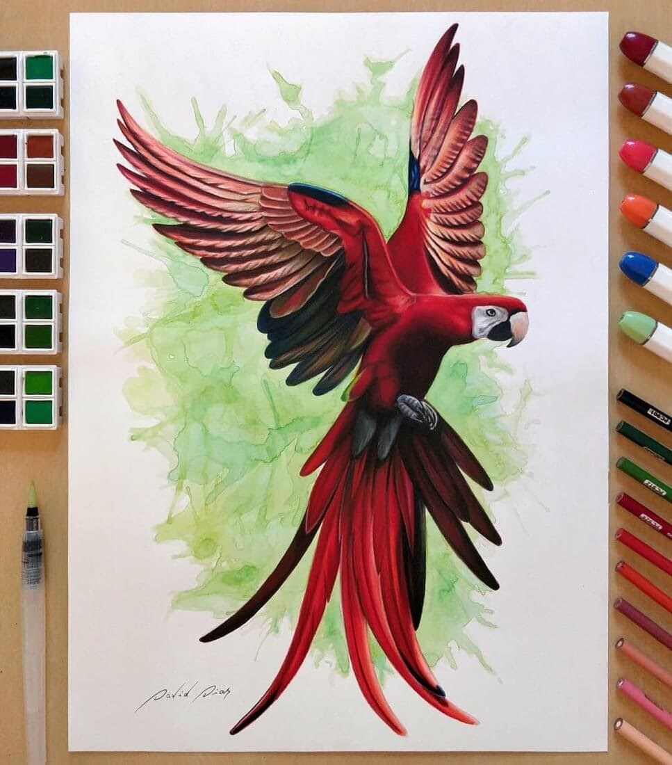 13-Macaw-Parrot-Bird-David-Dias-Drawings-Spanning-Many-different-Subjects-www-designstack-co