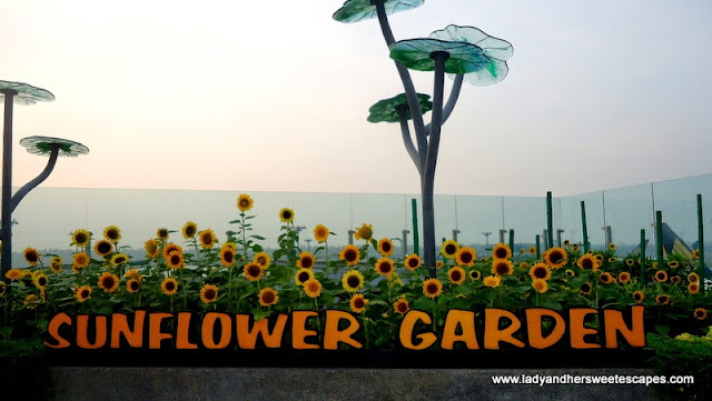 Sunflower Garden at Terminal 2 Changi Airport Singapore