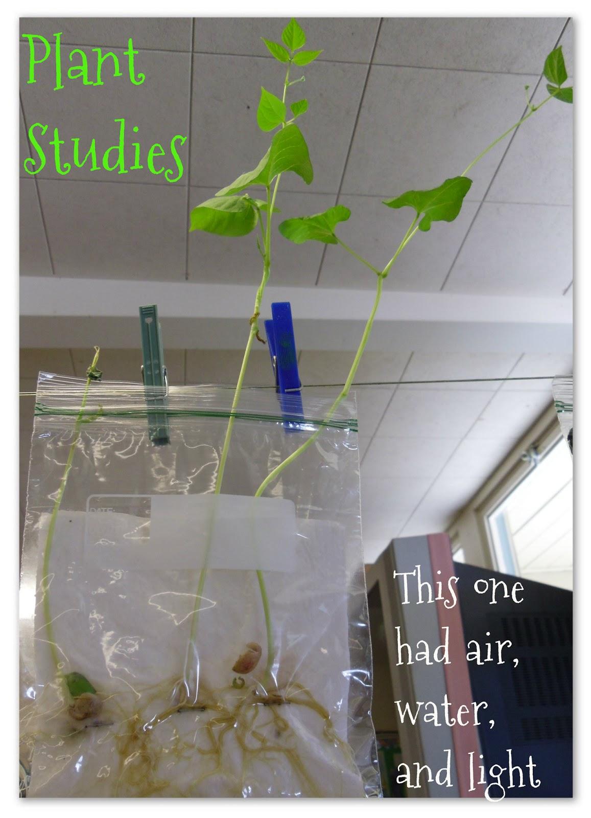 Mrs Byrd S Learning Tree Plant Stu S