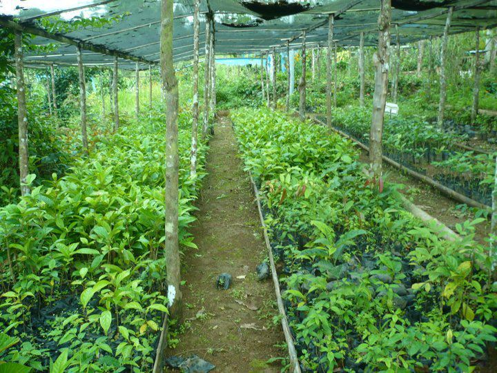 P7 00 Each Can There In Imbayao Is The Well Maintained Tourist Spot Bukidnon And Best Native Forest Tree Nursery Seedlings Diffe Species
